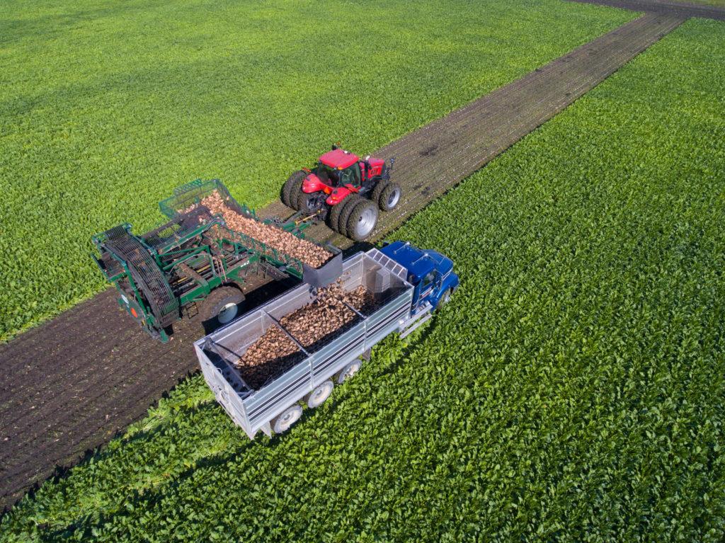 Imagen mostrando una cosechadora de remolacha sobre uno de los campos seguidos durante el proyecto. Crédito de la imagen: ACSC.